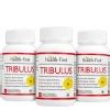 Health first Tribulus, 60 veggie capsule(s) - Pack of 3